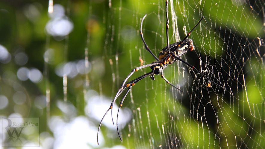 open cast mining sindhudurg wildlife spider endangered 2 Western Ghats Under Threat II: Open cast mining