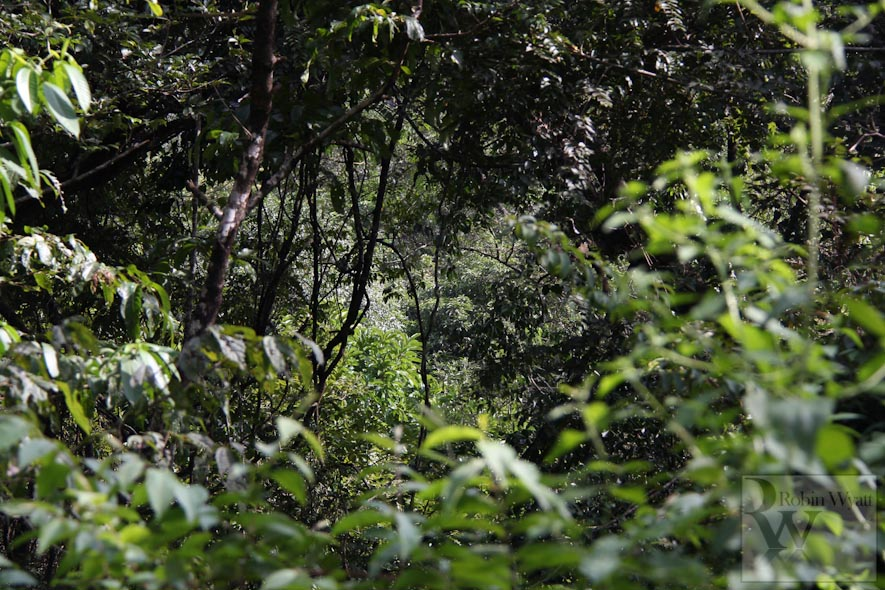 sindhudurg dense vegetation cover ugade reserve forest Western Ghats Under Threat II: Open cast mining