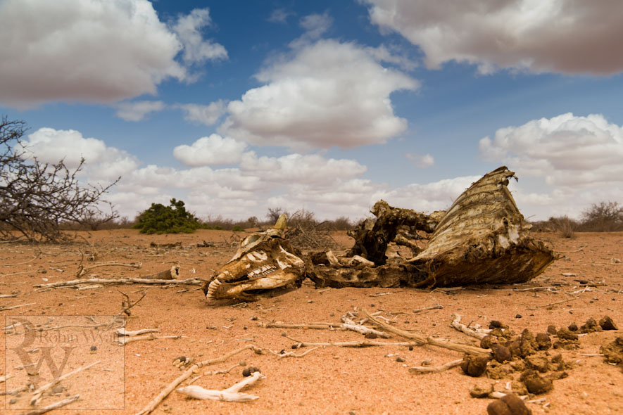 kenya north eastern wajir sheepfold ministries drought famine humanitarian relief emergency arid carcass 13851 Building Hope in the Face of Drought (Sheepfold Ministries)