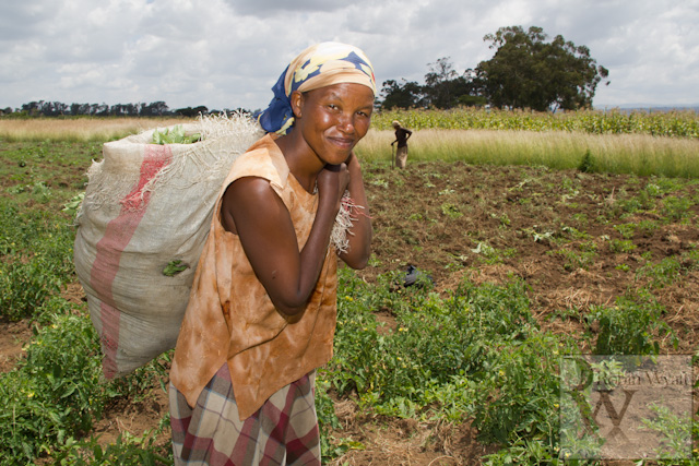 livelihoods recovery following post elections violence undp link Humanitarian Photography Update and my Moments of October